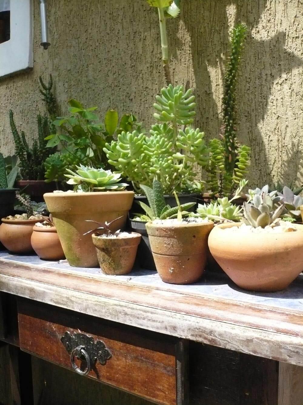 bancada com vasos de plantas