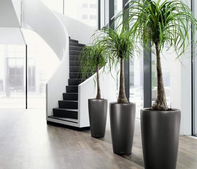 Utilize plantas dentro de casa para dar um ar de modernidade a mais em sua residência