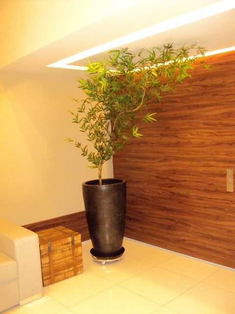 Bambu Mossô na sala decorando o canto do ambiente