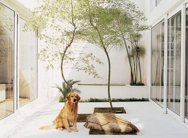 Jardim de inverno decorado com bambu mosso artificial
