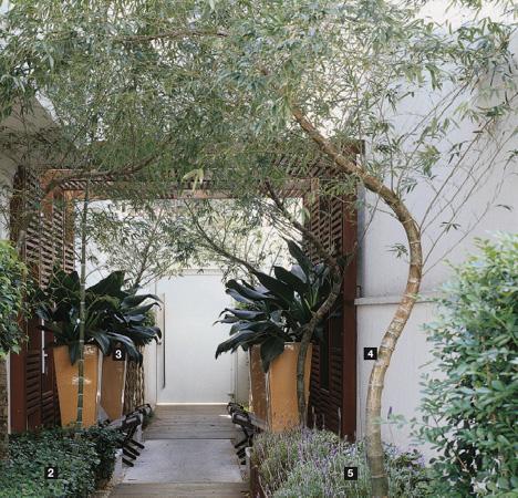 corredor de bambu mossô plantado no jardim
