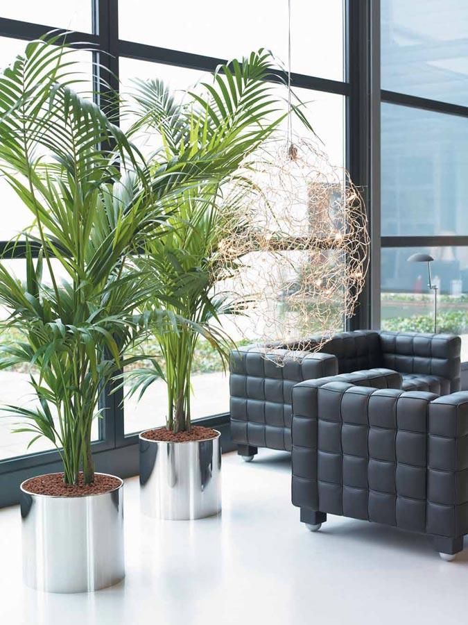 Plantas posicionadas perto da janela, aproveitando o máximo da luz natural do ambiente.