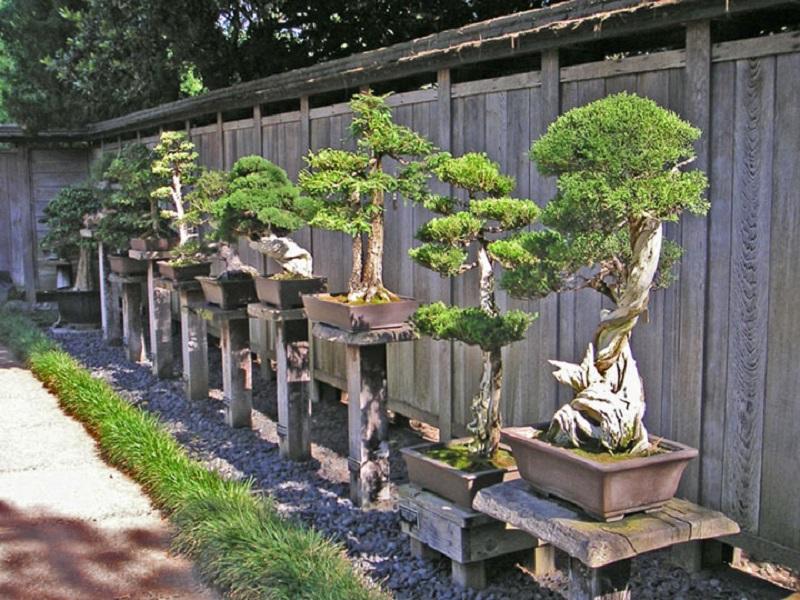 Bonsais, plantas em miniatura tradicionais japonesas também ajudam a dar um toque oriental ao espaço