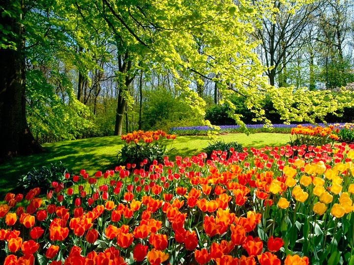 Jardim de flores europeu especialmente para o clima holandês