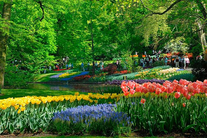 jardim de flores americano