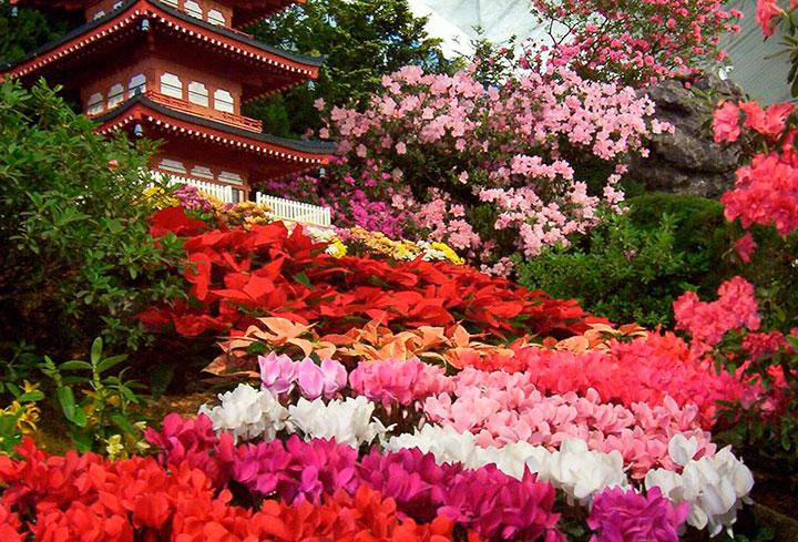 Jardim de flores com inspiração japonesa