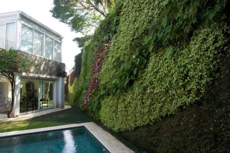 Jardim Vertical Aprenda A Montar Sua Parede Verde