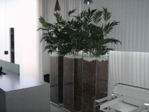 Plantas em vasos de vidro para decoração da sala