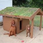 casa de cachorro com telhado verde