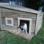 casinha de cachorro de palletes
