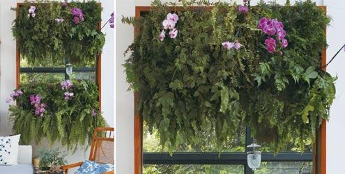 Uma planta excelente para locais que não tenha insolação direta são as samanbaias. Nesta imagens, estão permeadas por lindas orquídeas floridas
