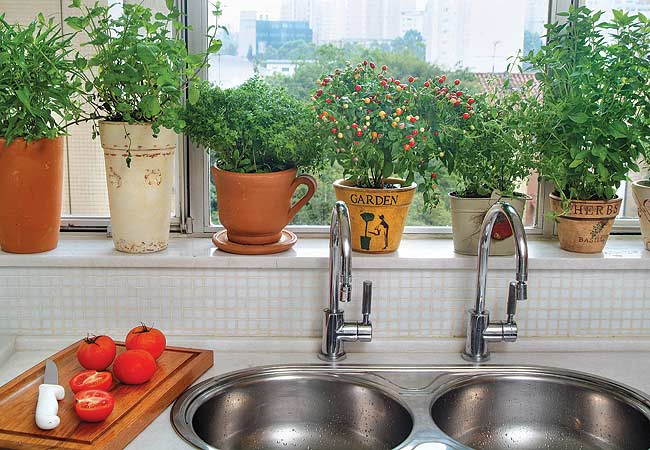 É possível até usar na decoração da cozinha plantas que possam ser usadas na culiária