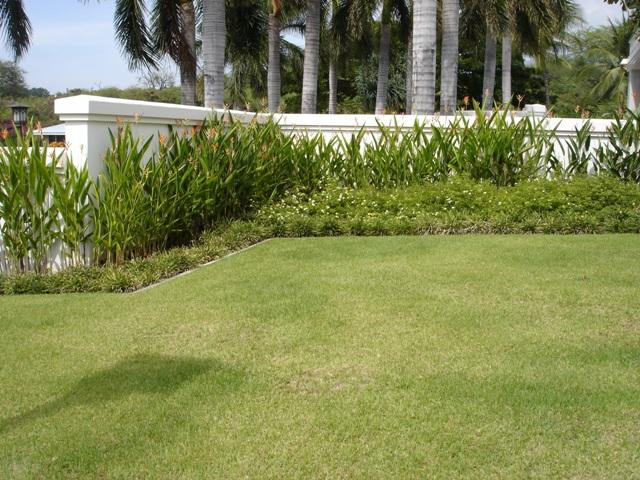tipos de grama