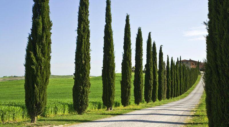 ciprestes fazendo o encaminhamento em estrada italiana - um belo efeito visual para a paisagem local.