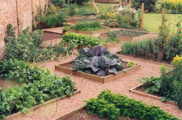 Jardim com hortaliças separadas em canteiros