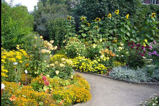 Esse jardim tem como elemento de fundo os girassóis
