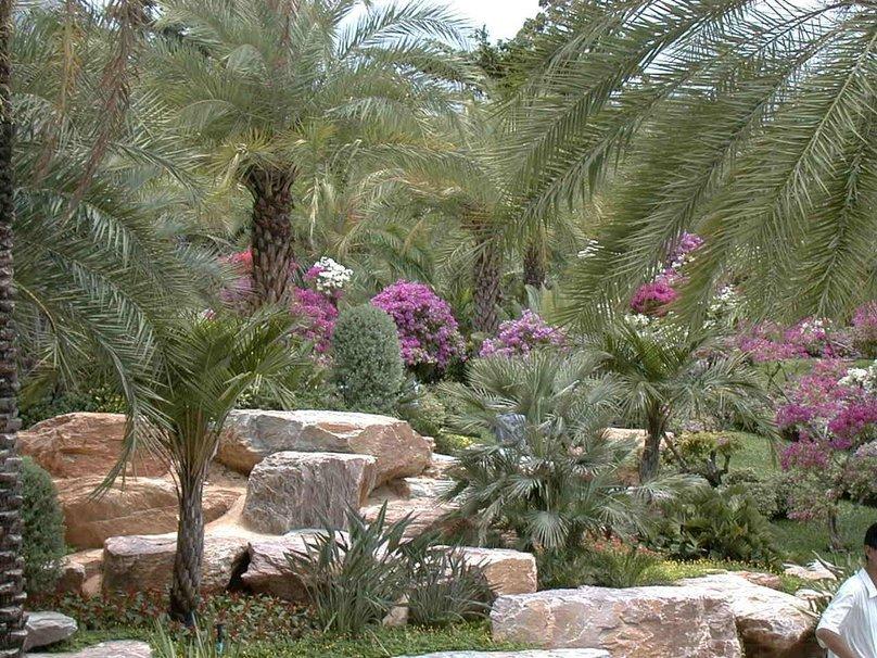 jardim rochoso com muitas palmeiras