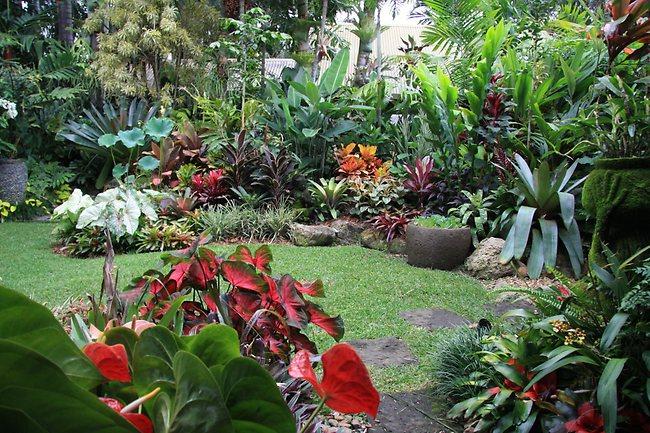 Outro toque importante são as plantas com cores variadas