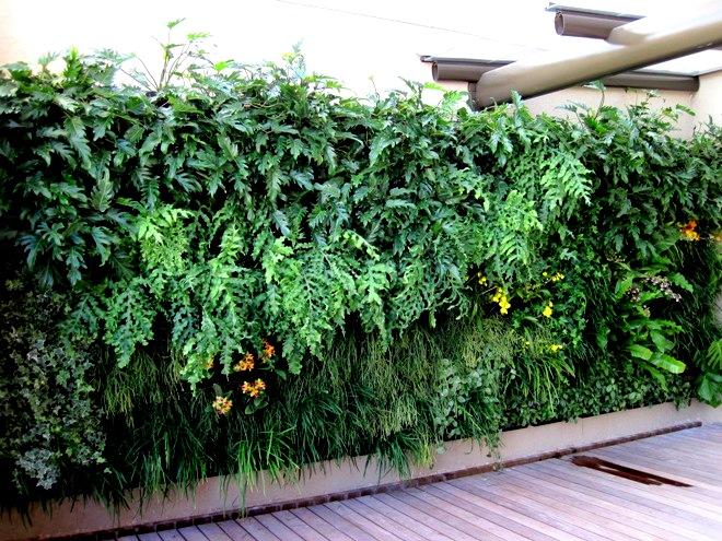 Parede com jardim vertical de samambaias
