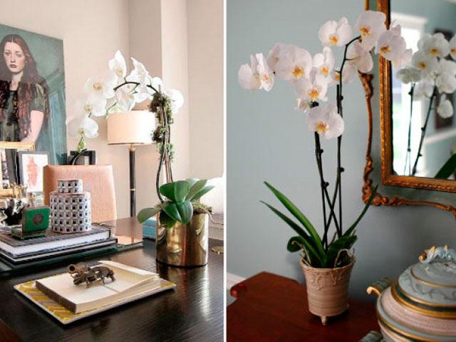 Já outra planta que é ótima na decoração são as orquídeas - além de bonitas e perfumadas, suas flores duram muito tempo dentro de casa