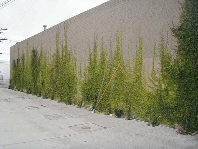 fachada de muro verde