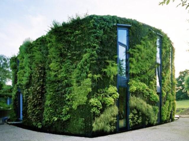 Nesse edifício, a vegetação cresce diretamente nas paredes da fachada