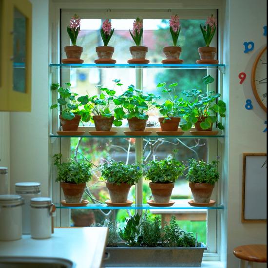 Prateleiras de horta e jardim vertical em frente a janela da cozinha