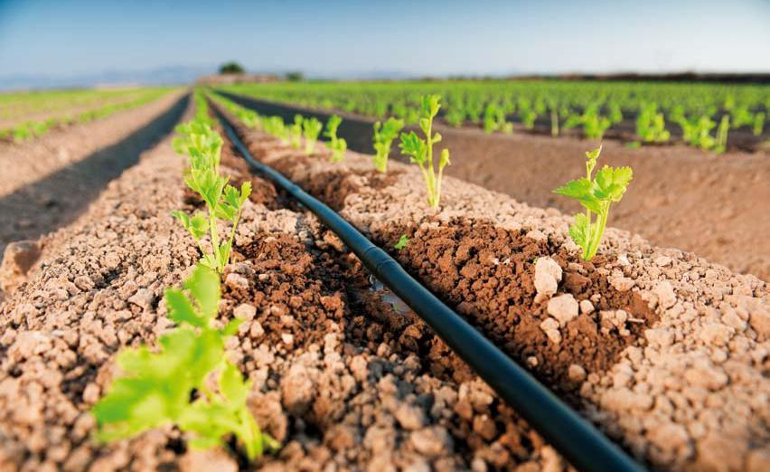 irrigação de canteiro por gotejamento