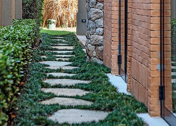 Uma de suas vantagens é que ela exige pouca exposição solar, podendo ser plantada em locais sombrios e estreitos