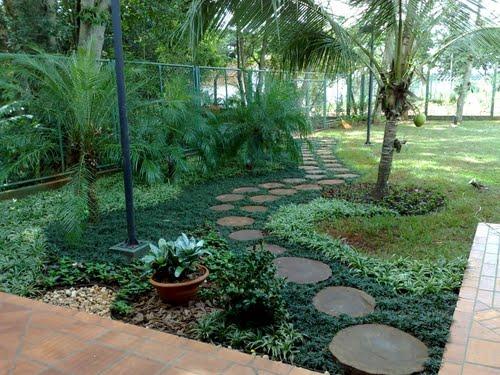 A grama preta pode ser usada para preencher o caminho entre pedras no jardim