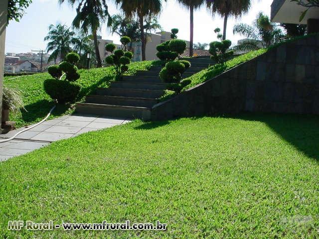 Jardim residencial fazendo uso da grama batatais