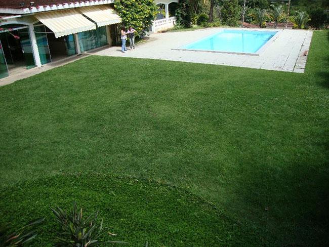 Gramado de pátio co piscina coberto com grama batatais