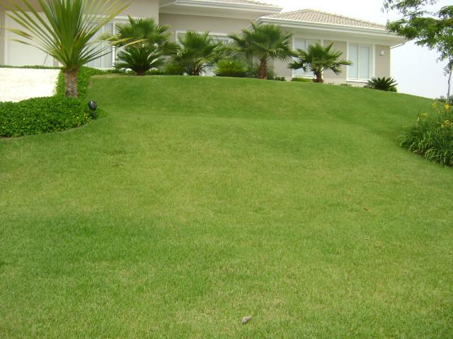 jardim com grama esmeralda