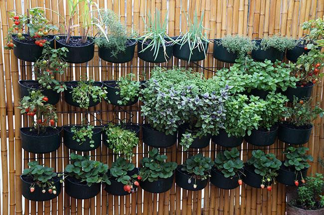 Na falta extrema de espaço, você pode usar asparedes para montar sua horta caseira
