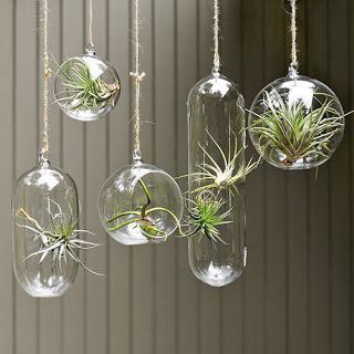 vasos de vidro pendentes decorativos
