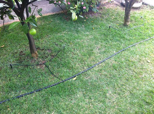 Irrigação de gramado por gotejamento