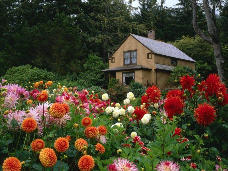 Jardim residencial florido
