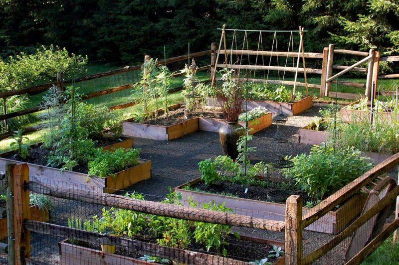 Canteiros de horta são uma excelente ideia de jardins funcionais