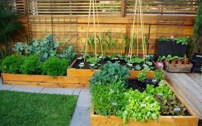 Jardim simples com verduras e chás