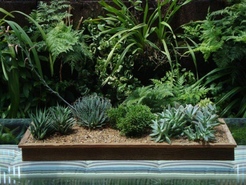 Jardim de Inverno interno com canteiro de plantas suculentas
