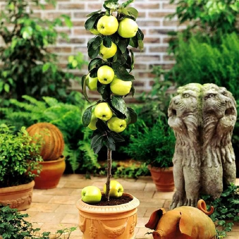 Pequena macieira em vaso para projeto paisagístico