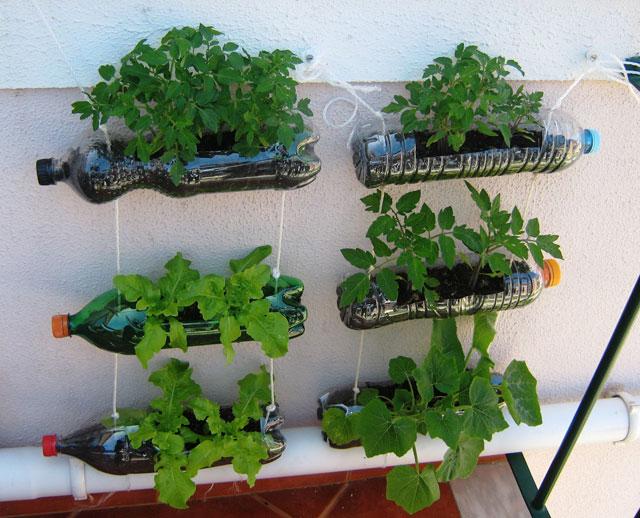 Pequena Horta vertical de garrafas PET