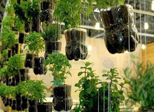 Horta suspensa com fundos de garrafas PET