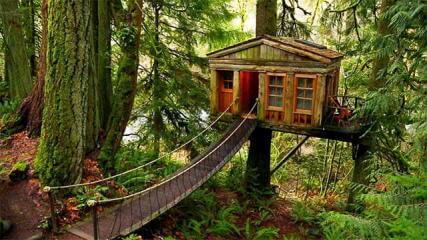 Casa na árvore com ponte