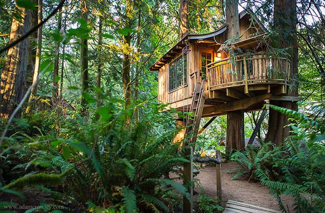 Casa na árvore me bosque