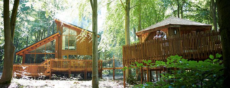 Casas de madeira na floresta