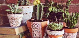 Plantas Suculentas para a decoração