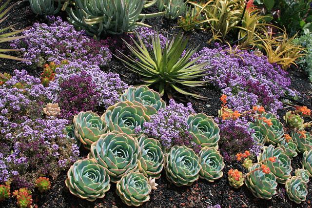 Jardim externo de suculentas decorativas