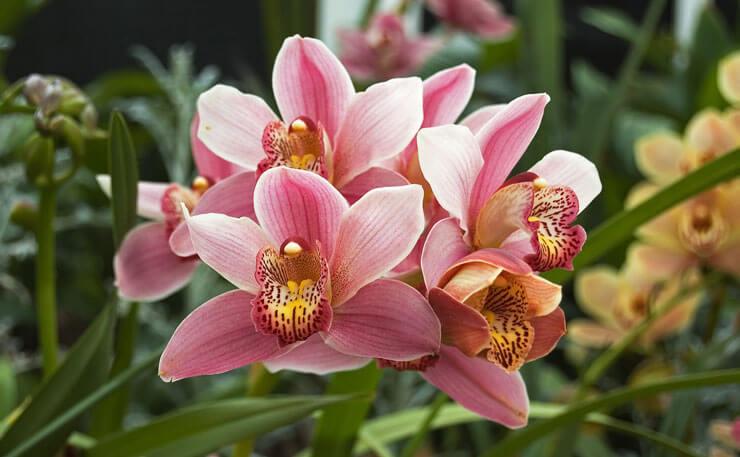 Orquídeas decorativas