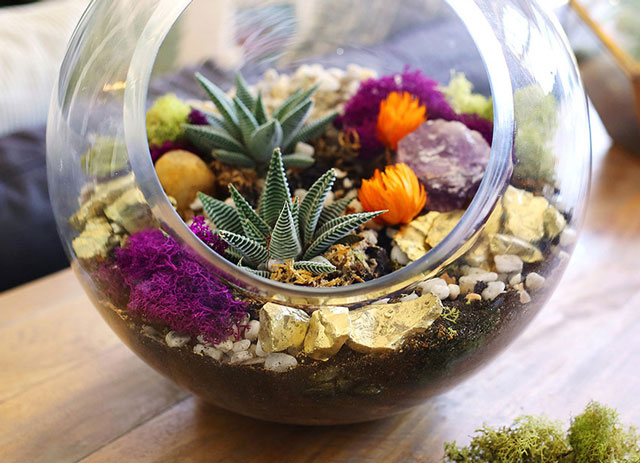 Plantas suculentas plantadas em aquario